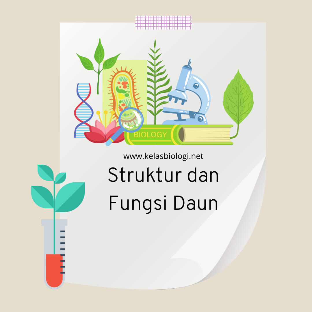 fungsi dan struktur daun