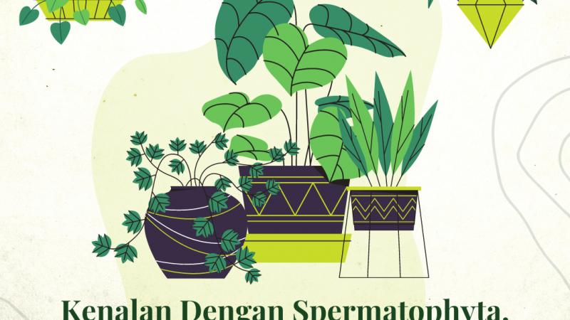 Kenalan Dengan Spermatophyta, Tumbuhan Berbiji Paling Sempurna