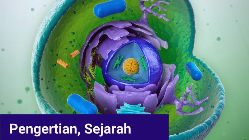 Pengertian, Sejarah dan Struktur dalam Sel