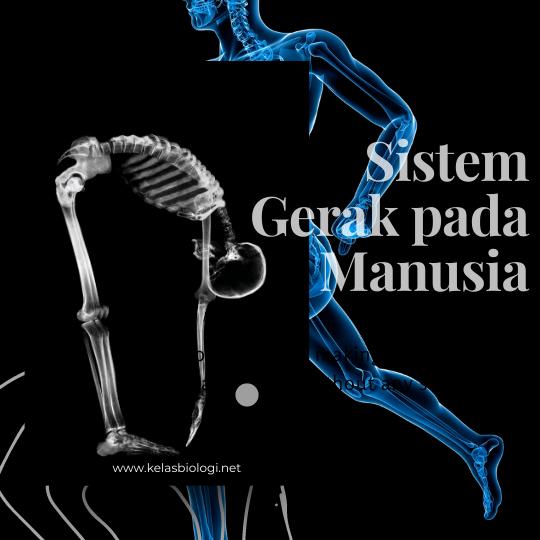 Sistem Gerak pada Manusia. Kenalan Yuk!
