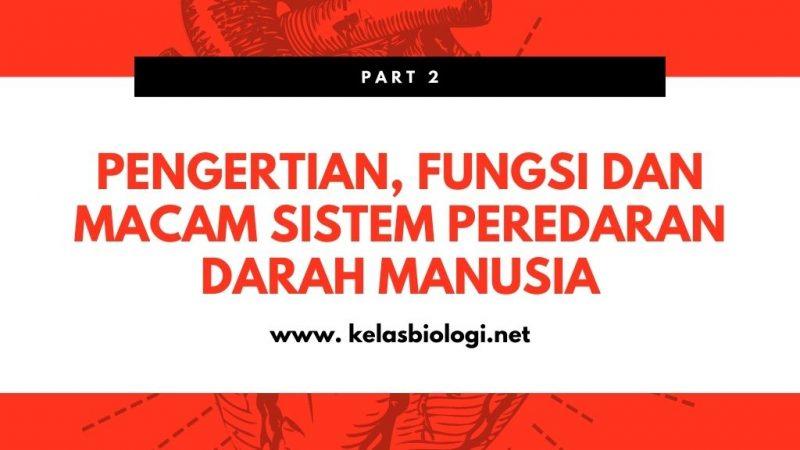 Pengertian, Fungsi dan Macam Sistem Peredaran Darah Manusia